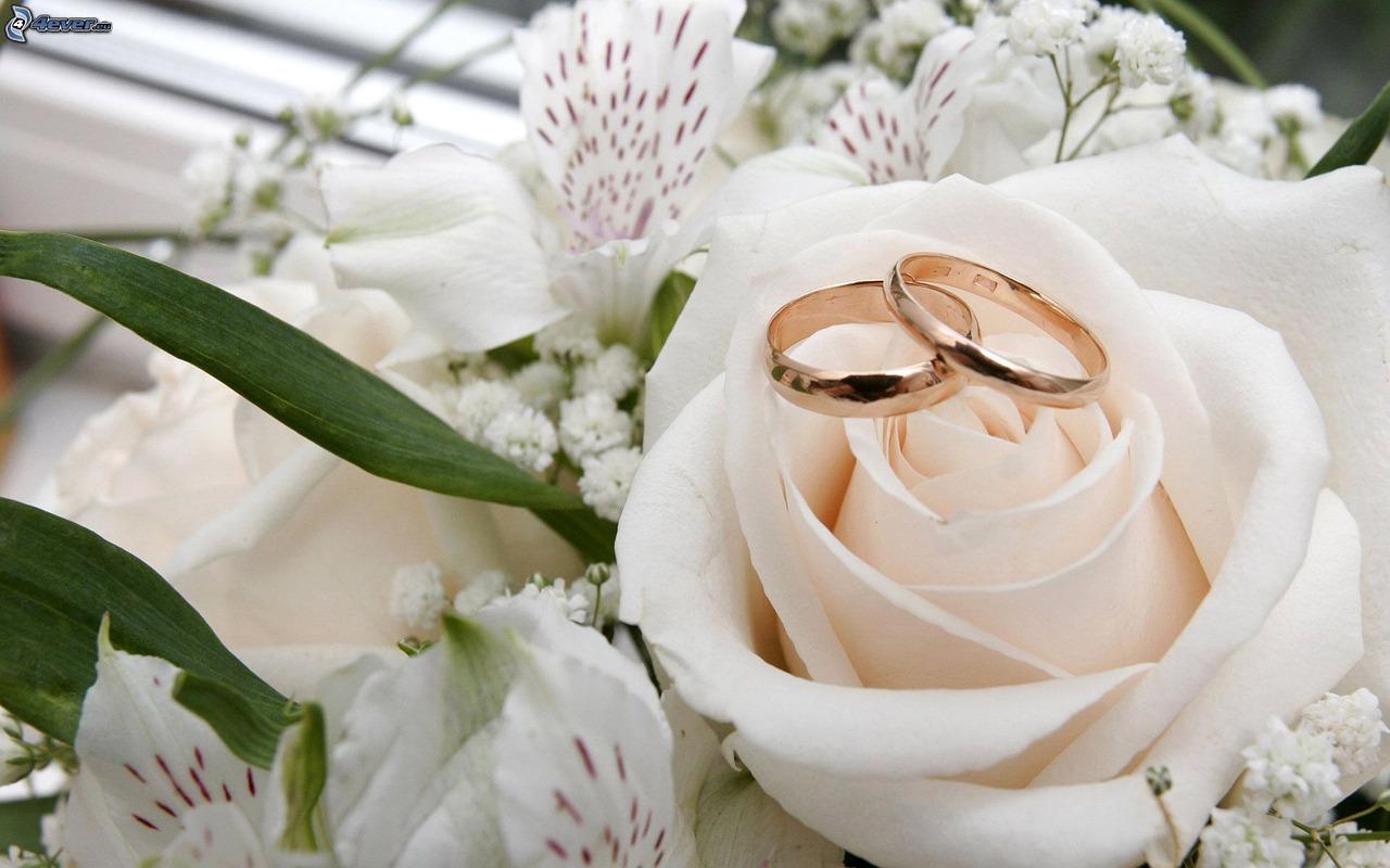 flower-3092423_1280