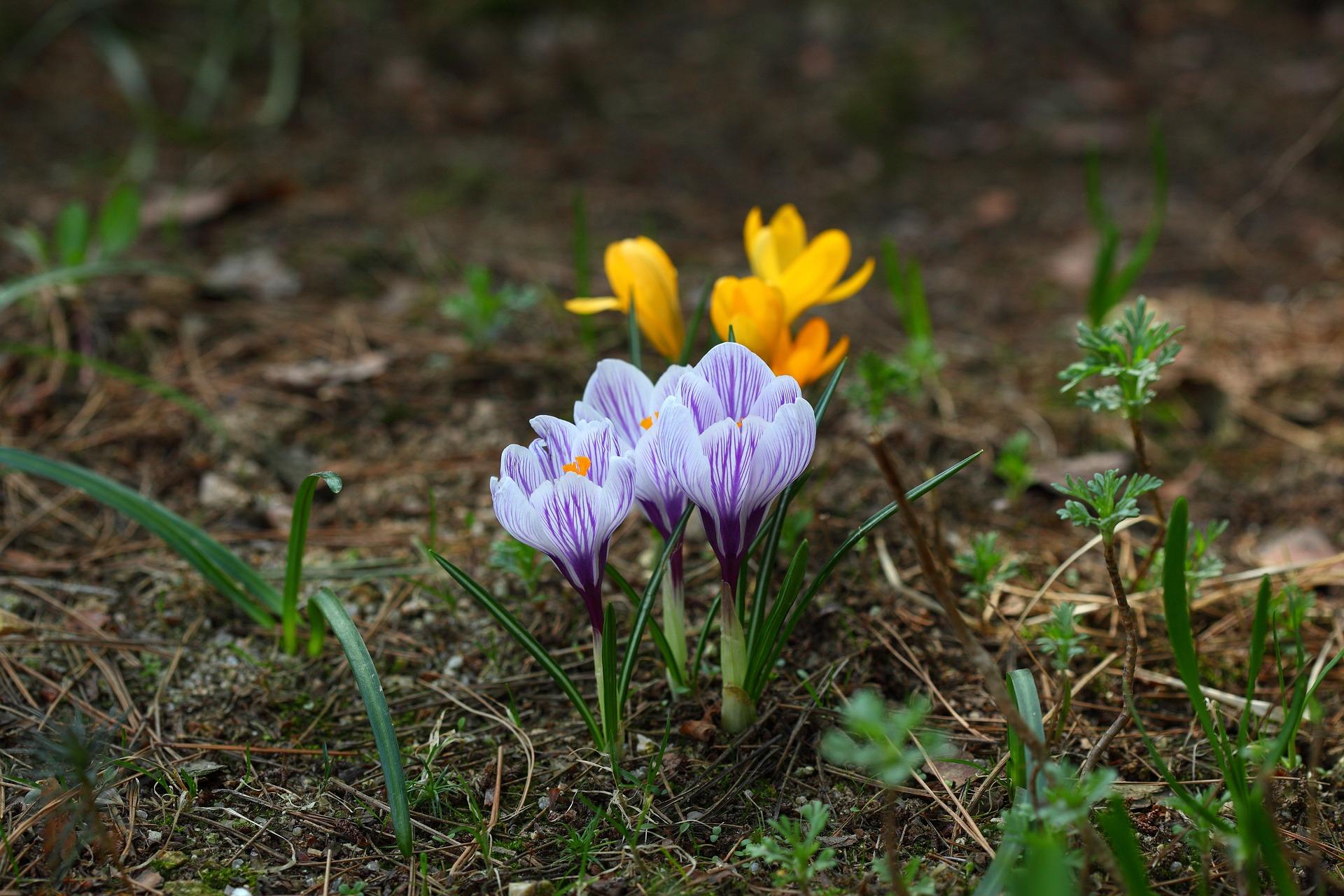 nature-3159874_1920