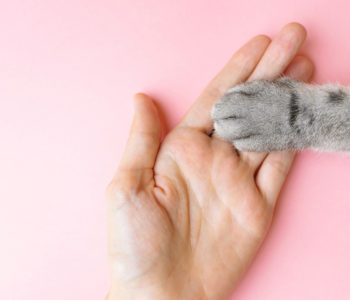 gray-striped-cat-s-paw-human-hand-pink